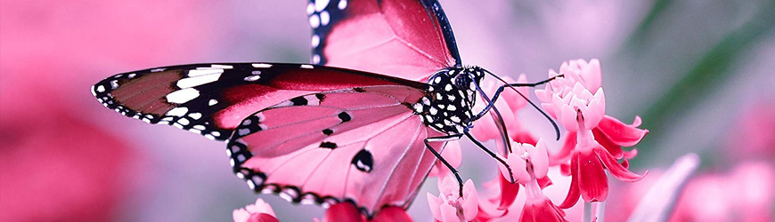 butterfly_img
