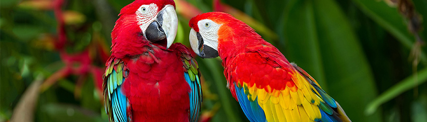 parrot_img